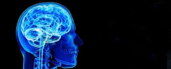 Transformed Brain Transformed Life: Neuroscience and Bible Memorization